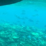 子連れで沖縄旅行2日目:あっついのでプールと海で遊ぶ☆